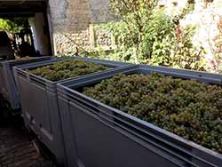 Riesling's coming home